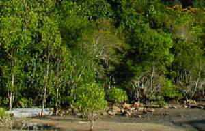 rainforest and beach forest in Borneo